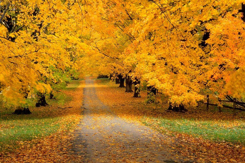 есенски патувања